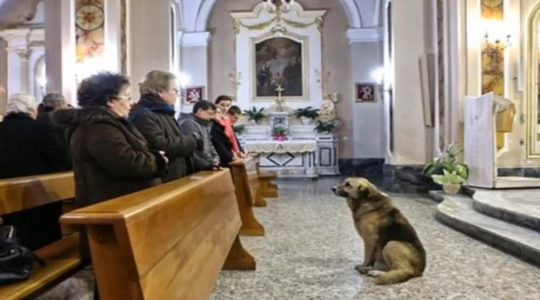 Pies, który przychodzi do kościoła  (10.01.2019)