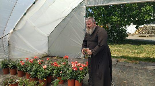 W poszukiwaniu róż dla Matki Bożej 22.06.2021